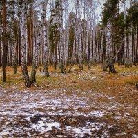 В лесу . :: Мила Бовкун