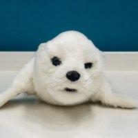Робот-тюлень :: Сергей Черепанов