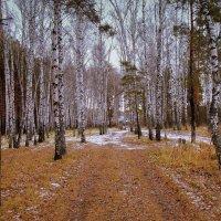Лесными дорогами. :: Мила Бовкун