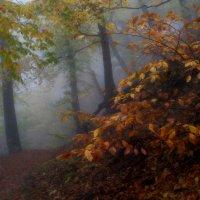 На тропах осенних...... :: Юрий Цыплятников