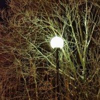 Ночь, улица, фонарь... :: Наталья Жукова
