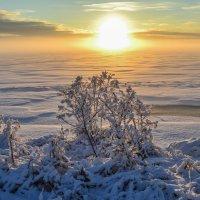 игры зимнего тумана :: сергей