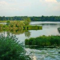 Самара,река Самара :: Ольга Зубова
