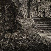 Старое дерево (фрагмент) :: Сергей