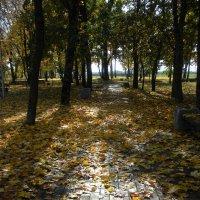 Осенний парк :: Василь Веренич