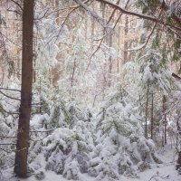 ...А просто выпал снег…И хмурый лес как будто стал светлее... :: Елена Ярова