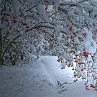 Ноябрь в моём саду... :: Галина Ильясова