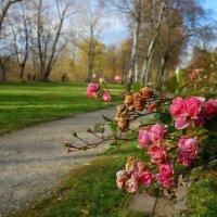 Осенний букет... :: Galina Dzubina