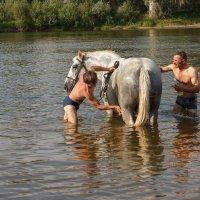 Купание серого коня :: Ольга