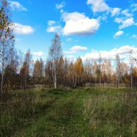 Дорога в осень :: Милешкин Владимир Алексеевич