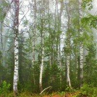 Августовский грибной туман :: Сергей Чиняев
