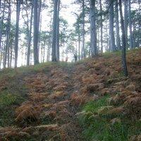 На лесной тропинке :: Руслан Newman