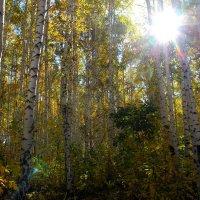 осень в лесу... :: Таня Новикова