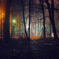 из лесу в городской туман :: Paul B.