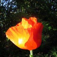Аленький цветочек :: Leonid Tabakov
