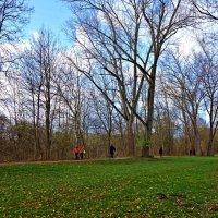 Весенний день в...ноябре... :: Galina Dzubina