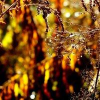 красивые моменты ноября :: Александр Прокудин