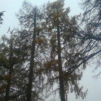 Туман :: Сапсан
