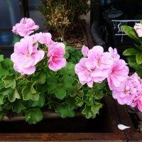 Цветы, как интерьер :: татьяна