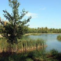 Озеро в парке! :: раиса Орловская