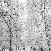 Зима идет. . :: Юлия Закопайло