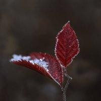 Дыхание зимы :: Татьяна Панчешная