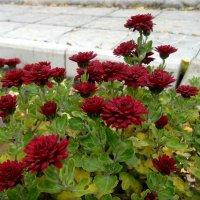 Еще вчера эти  цветы были живы... :: Чария Зоя