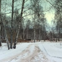 Вот и ноябрь . :: Мила Бовкун