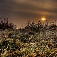 Обычная трава... :: Сергей