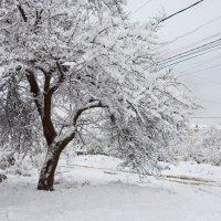 Первый снег... :: Михаил Болдырев