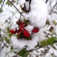 В снежном наряде :: Елена Семигина