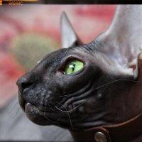 Всё тот-же мой кот Лекс :: Марина Влади-на