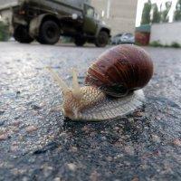 Разошлись на контр- галсах... :: Владимир Прокопов