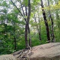 И на камнях растут деревья... :: Елена Даньшина
