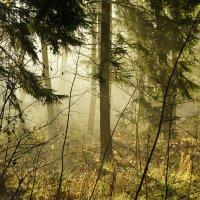 Утро туманное... :: Наталия Сарана
