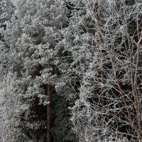 Тропа в лес. :: Наталья