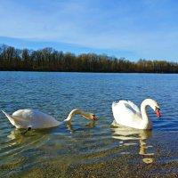 В лучах ноябрьского солнышка.... :: Galina Dzubina