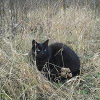 Лесной котик :: наталия