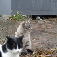 Кошки любят собак... на расстоянии! :: Алекс Аро Аро