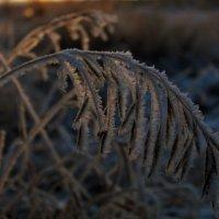 Серебряные травы :: Ольга