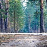 """"""" Утро в лесу"""" :: Игорь Сорокин"""