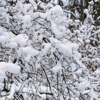 Снежное кружево :: Дмитрий Ерохин