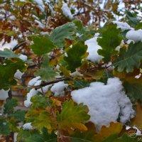 Деревья в снегу :: Александр Волков