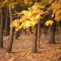 осень в лесу :: ninell nikitina