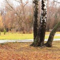 Поздняя осень в парке :: Татьяна Ломтева