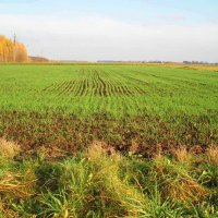 Karsakiškio laukas / Field in Karsakiškis :: silvestras gaiziunas gaiziunas