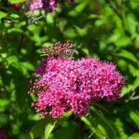 Разные и красивые цветы :: Милешкин Владимир Алексеевич
