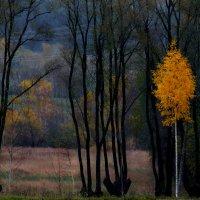 Осень играет с цветами :: Aleksander Kaasik