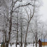 Голуби и первый снег :: Леонид