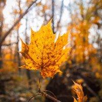 Осенний танец в предзакатном солнце :: Олександр Волжский